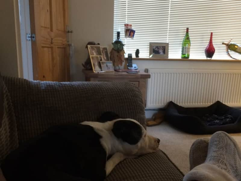 Housesitting assignment in Cliffe, United Kingdom