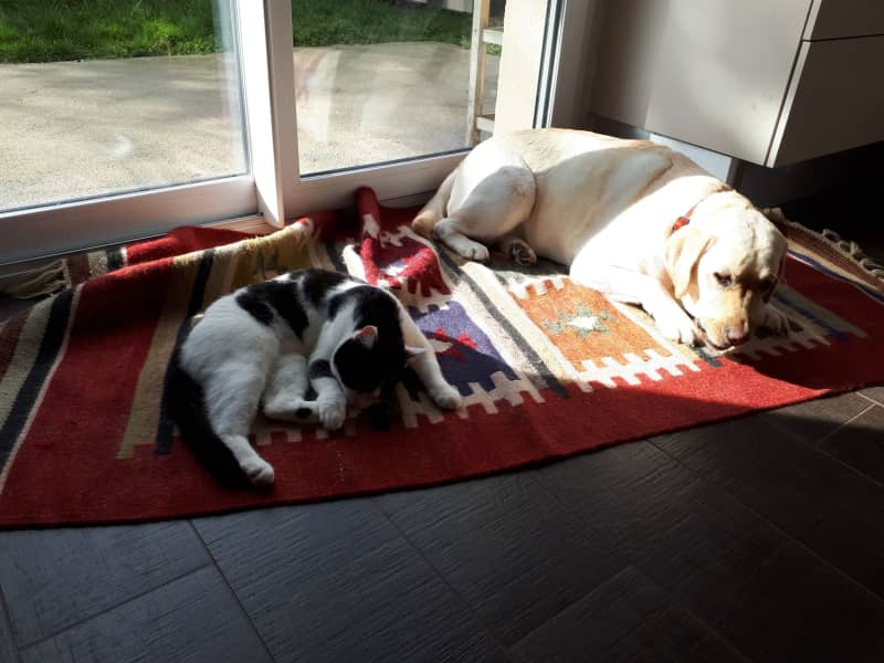 Housesitting assignment in Thoiry, France