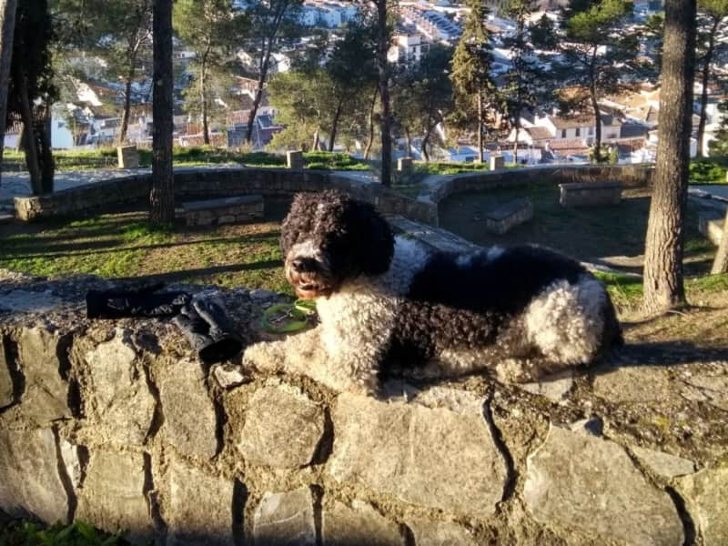 Housesitting assignment in Archidona, Spain