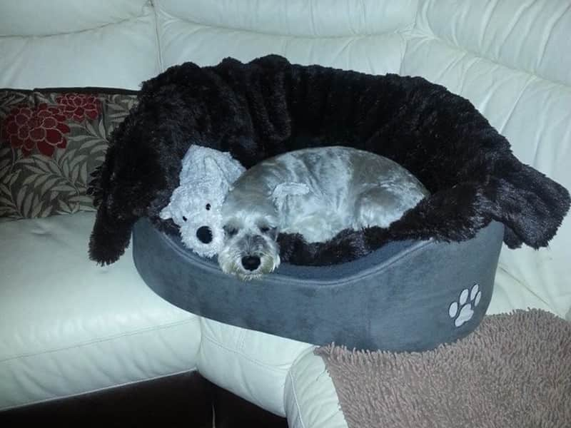 Housesitting assignment in Manchester, United Kingdom