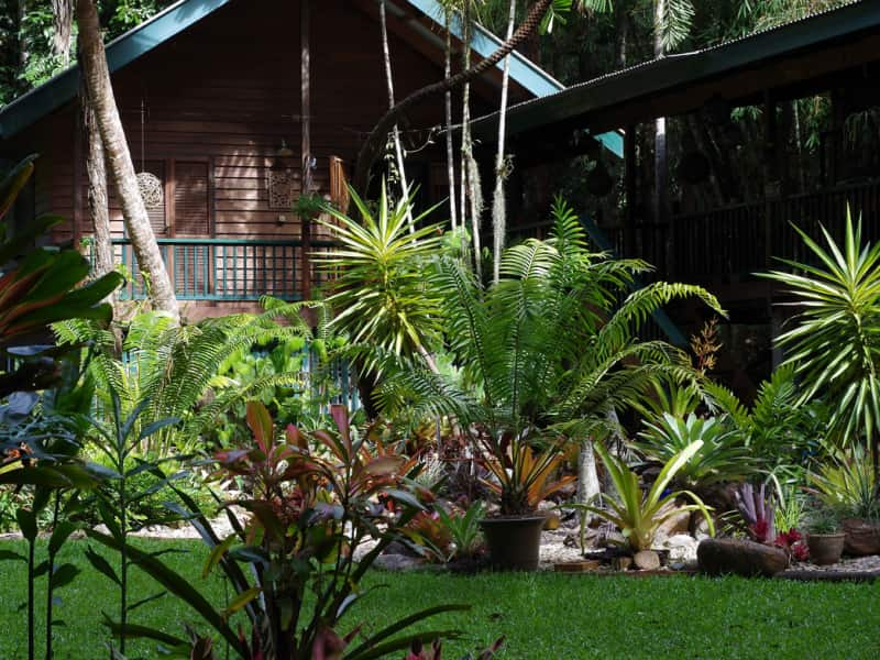 Housesitting assignment in Kuranda, Queensland, Australia