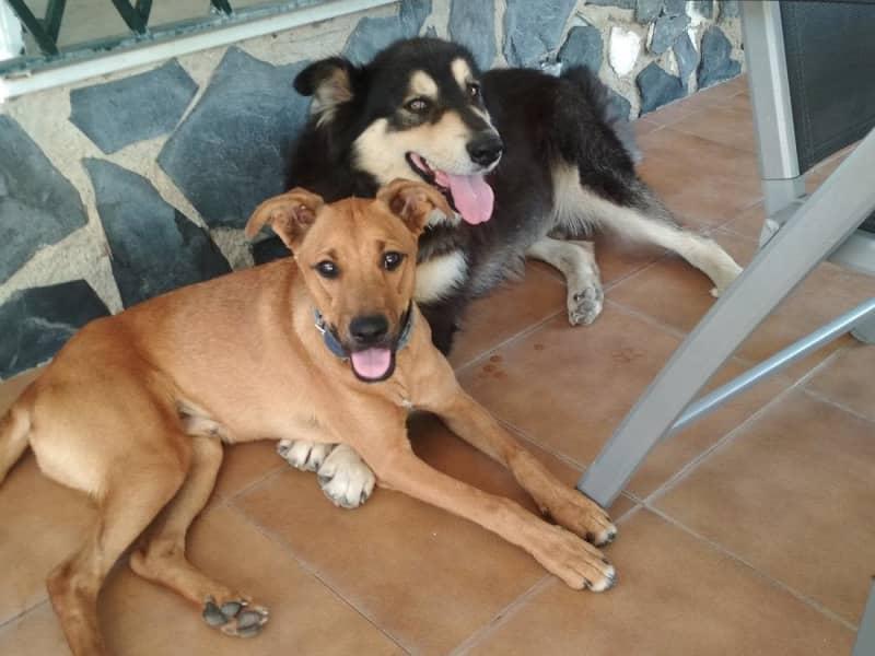 Marita & Johannes from Santiago de Veraguas, Panama