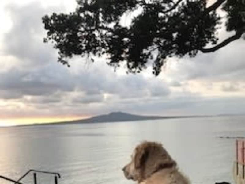 Housesitting assignment in Takapuna, New Zealand
