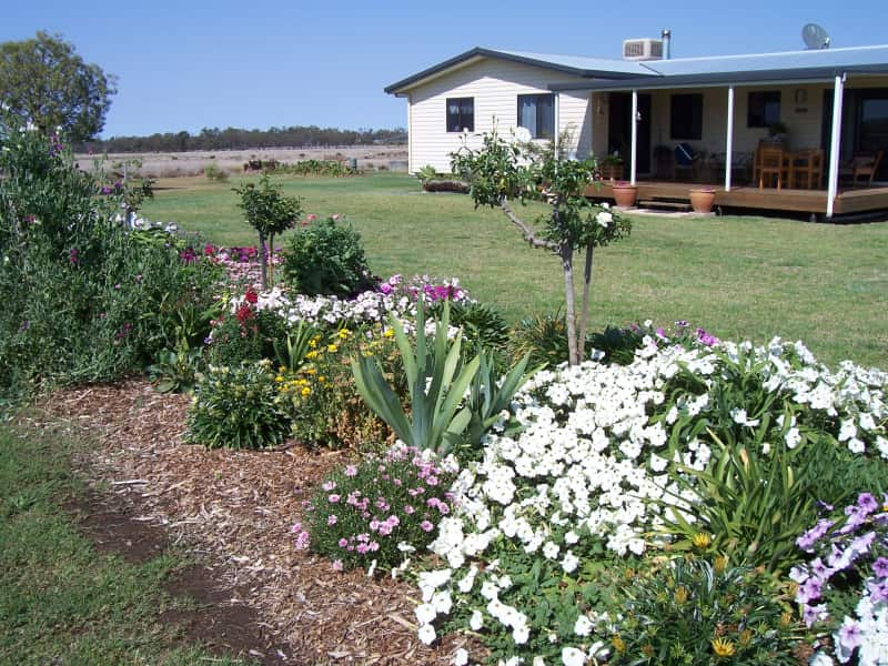 Housesitting assignment in Wallumbilla, Queensland, Australia