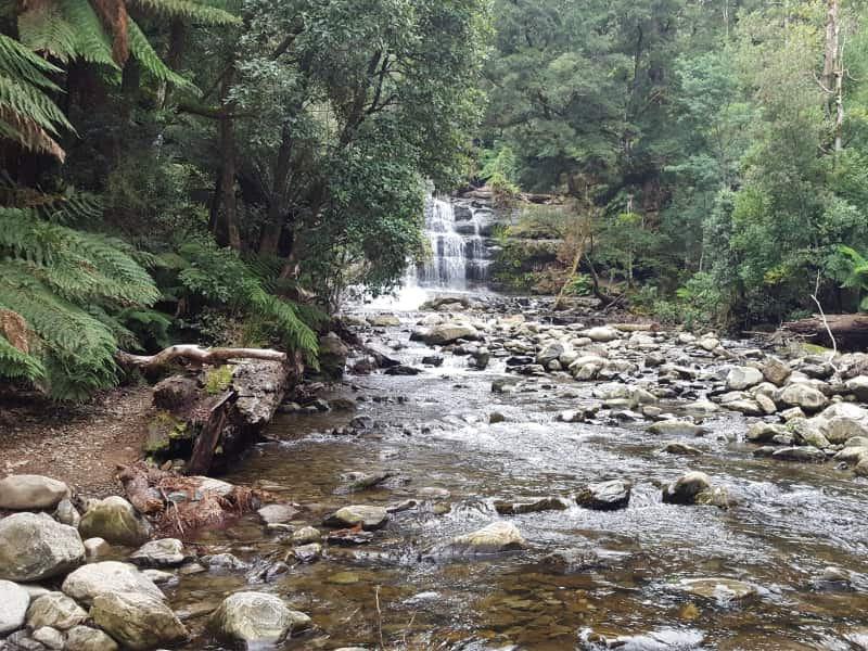 Housesitting assignment in Longford, Tasmania, Australia
