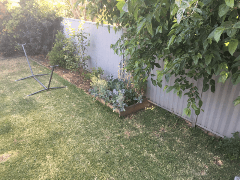 Housesitting assignment in Revesby, New South Wales, Australia
