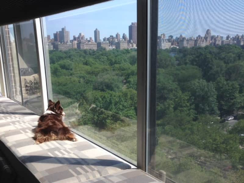 Housesitting assignment in Manhattan, New York, United States
