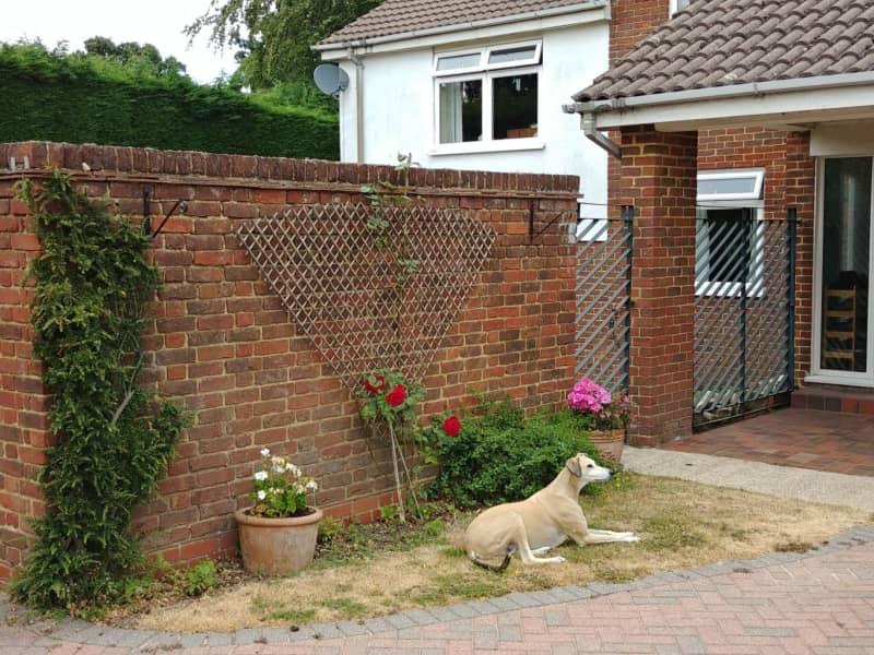 Housesitting assignment in Gillingham, United Kingdom