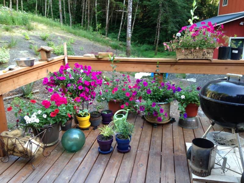Housesitting assignment in Longview, Washington, United States