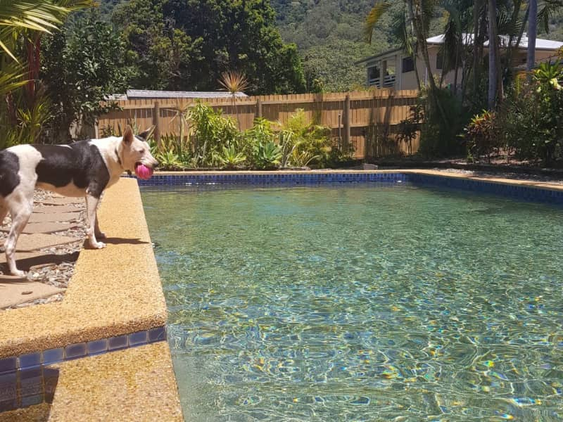 Housesitting assignment in Bayview Heights, Queensland, Australia