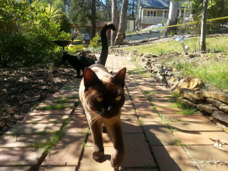Housesitting assignment in Leura, New South Wales, Australia
