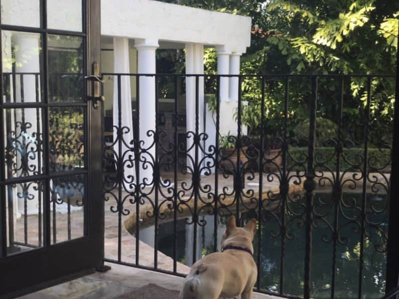 Housesitting assignment in Coral Gables, Florida, United States