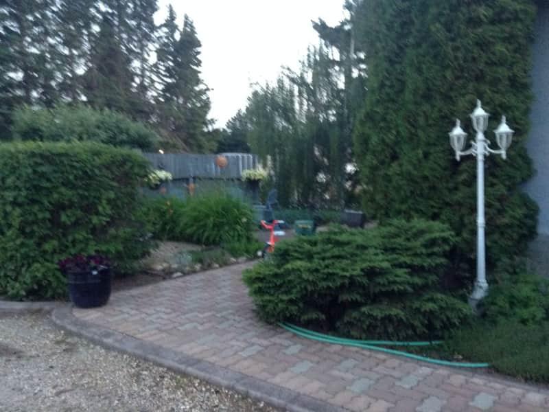 Housesitting assignment in Rimbey, Alberta, Canada