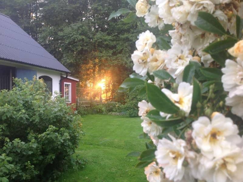Housesitting assignment in Eslöv, Sweden
