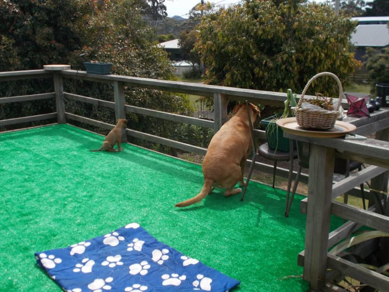 Housesitting assignment in Wynyard, Tasmania, Australia