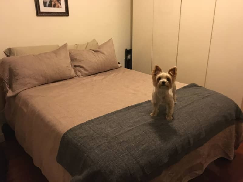 Housesitting assignment in Causeway Bay, Hong Kong