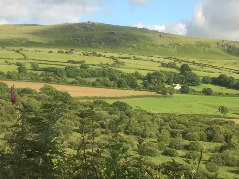 Housesitting assignment in North Tawton, United Kingdom