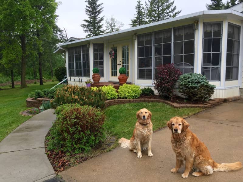Housesitting assignment in Sherwood Park, Alberta, Canada