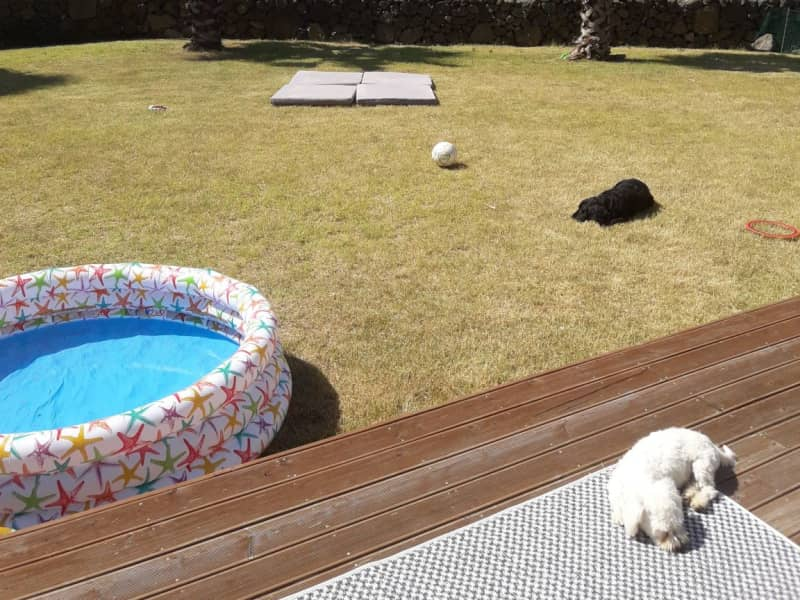 Housesitting assignment in Daejeong, South Korea
