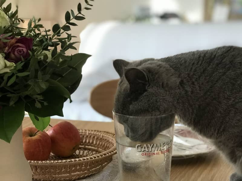 Housesitting assignment in Potsdam, Germany