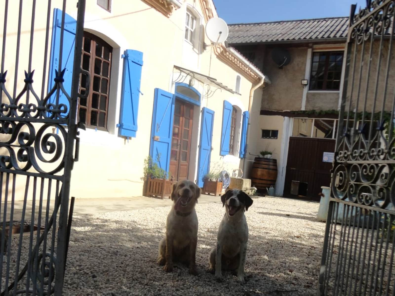 Housesitting assignment in Viella, France