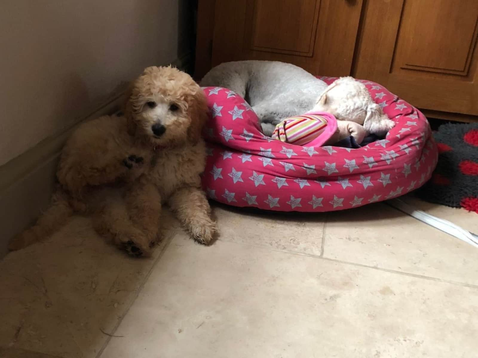Housesitting assignment in Haresfield, United Kingdom
