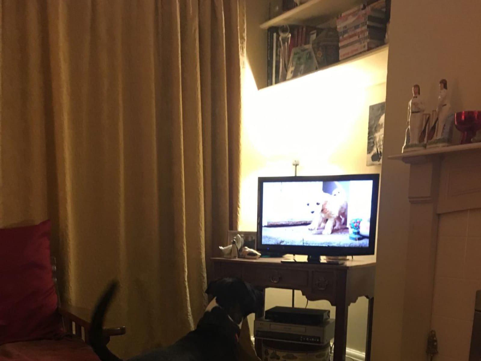 Housesitting assignment in Derby, United Kingdom