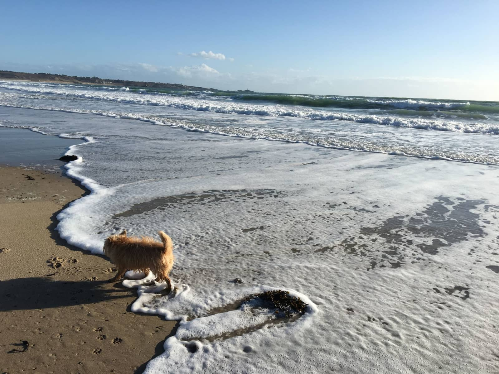 Housesitting assignment in St Lawrence, Jersey