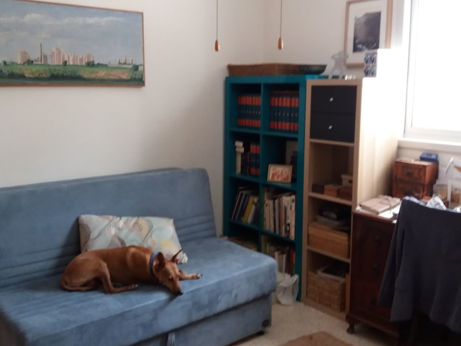 Housesitting assignment in Herzliyya, Israel