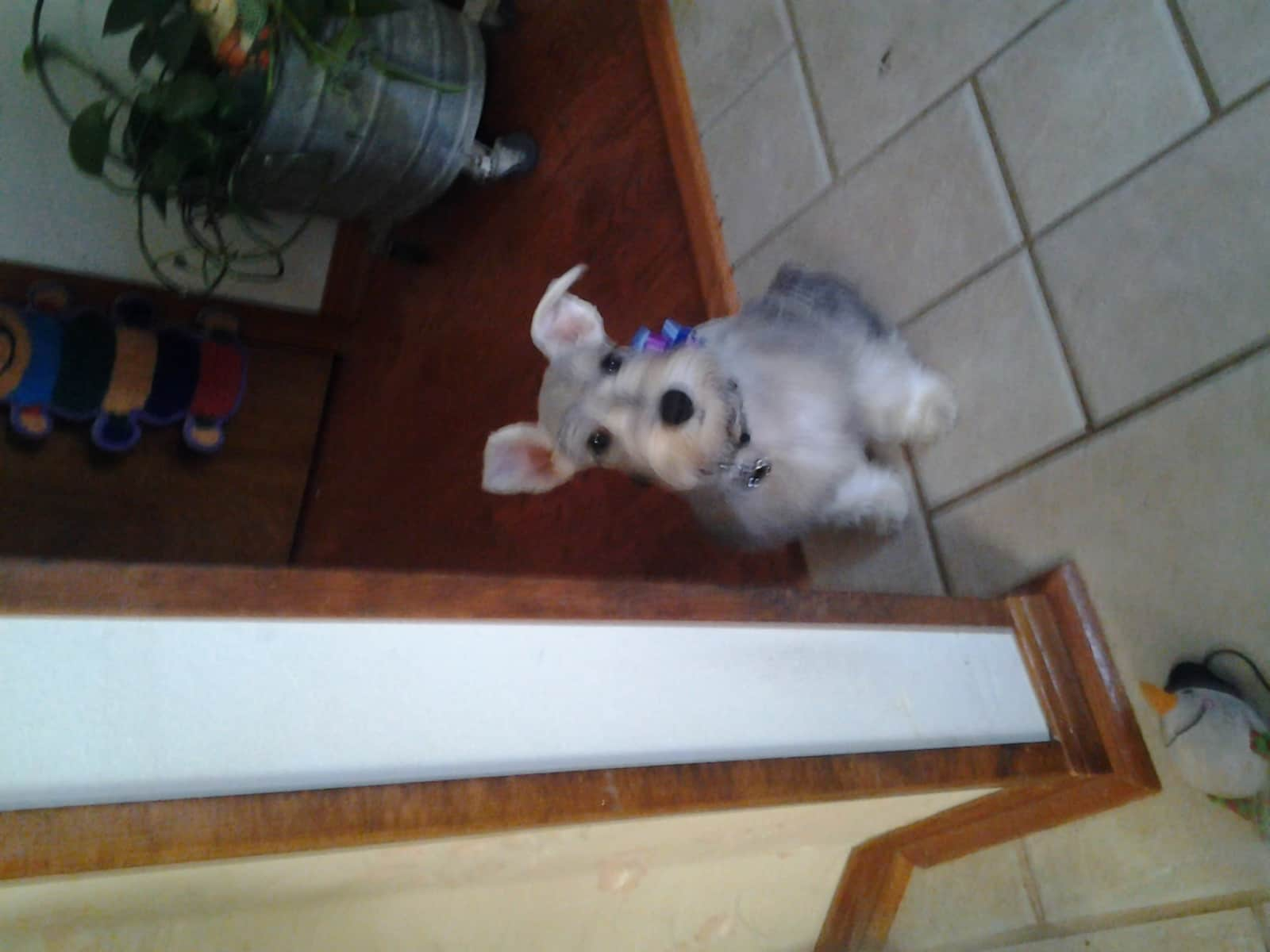 Housesitting assignment in Pensacola, Florida, United States