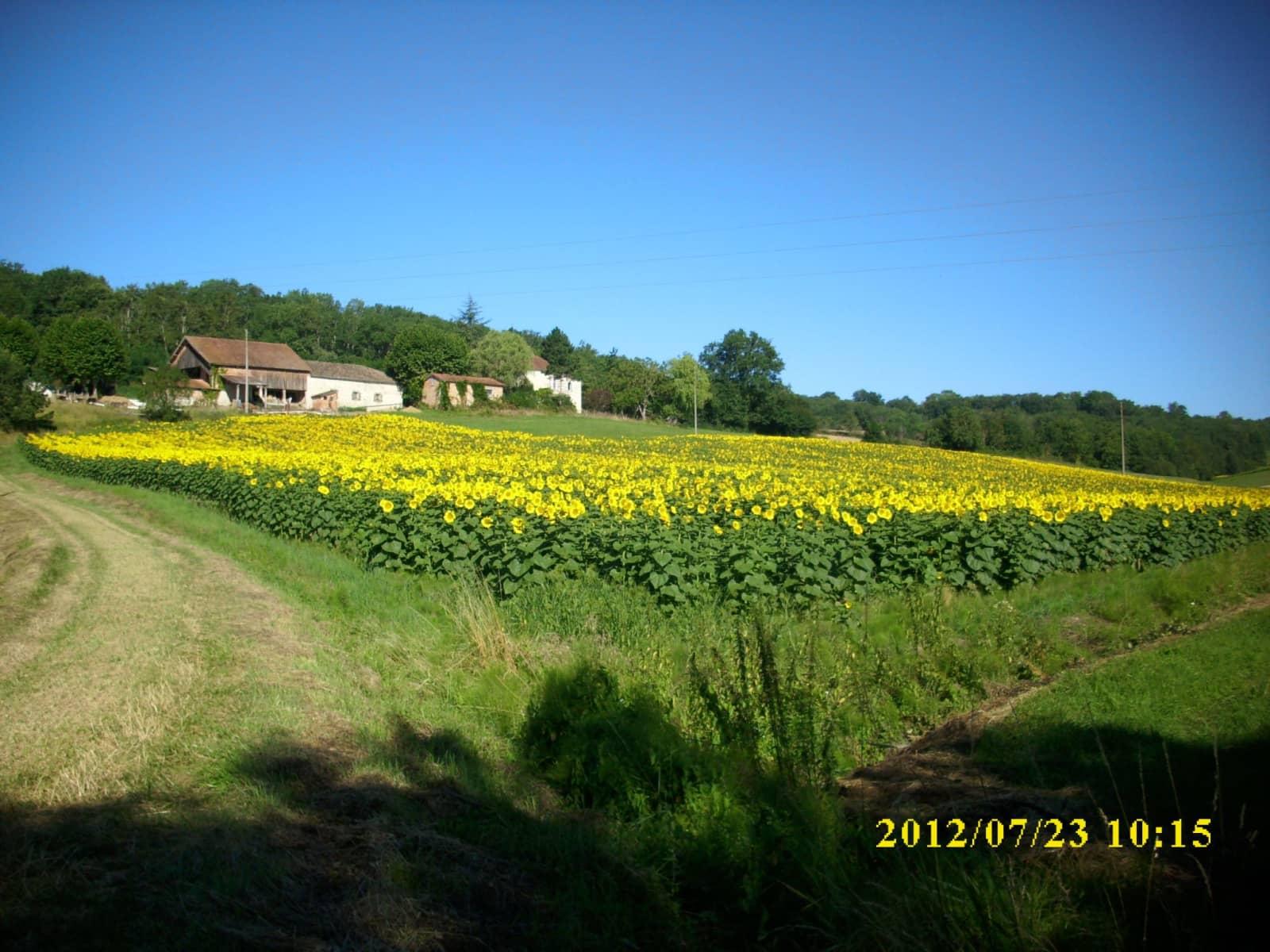 Housesitting assignment in Montagudet, France