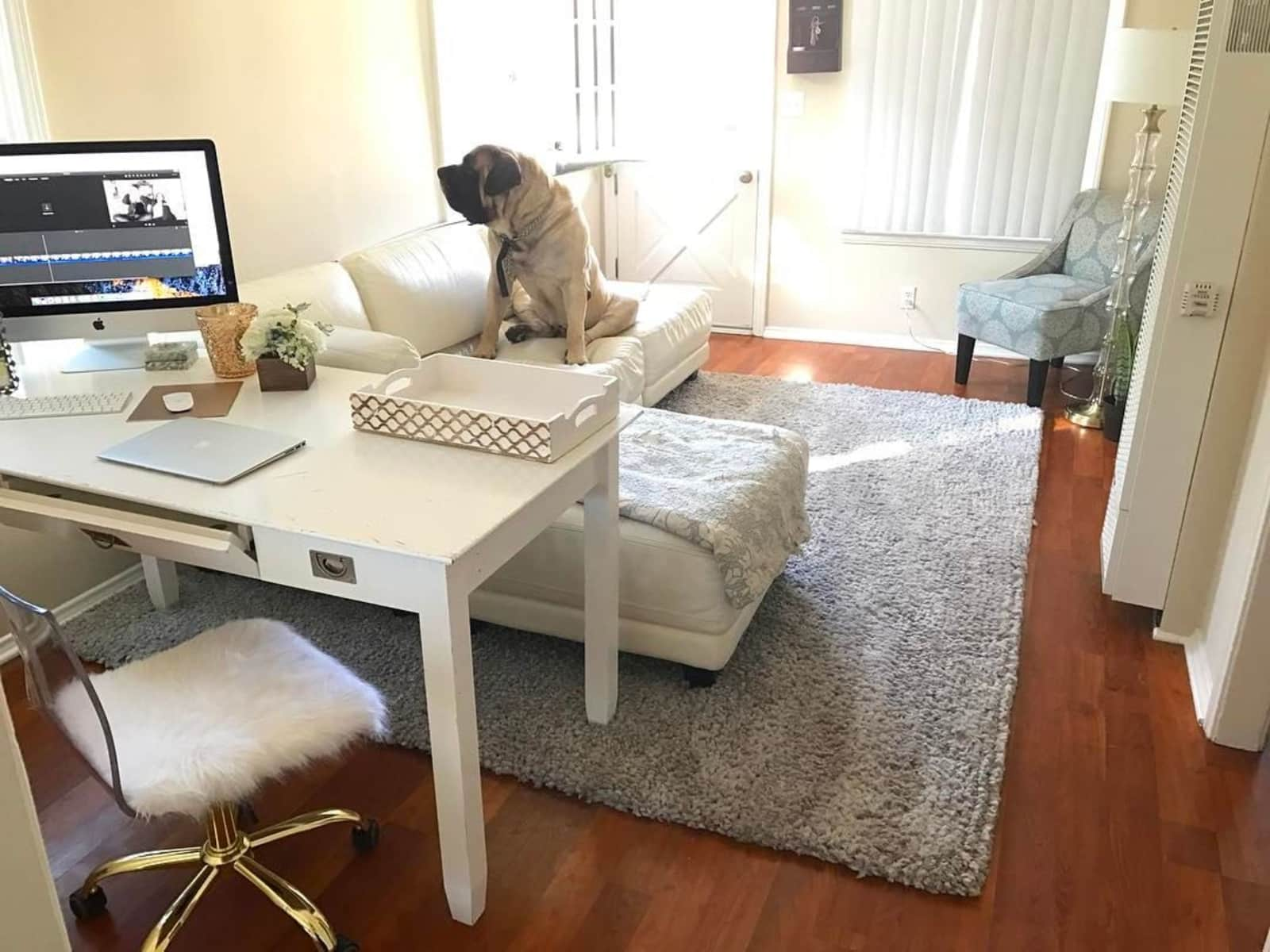 Housesitting assignment in Costa Mesa, California, United States