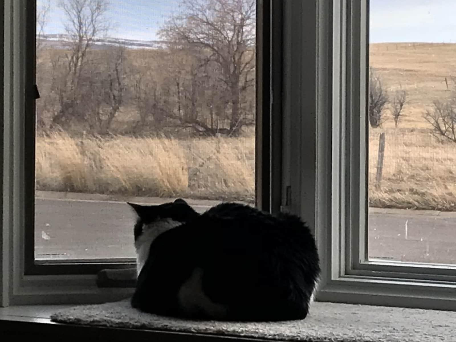 Housesitting assignment in Laramie, Wyoming, United States