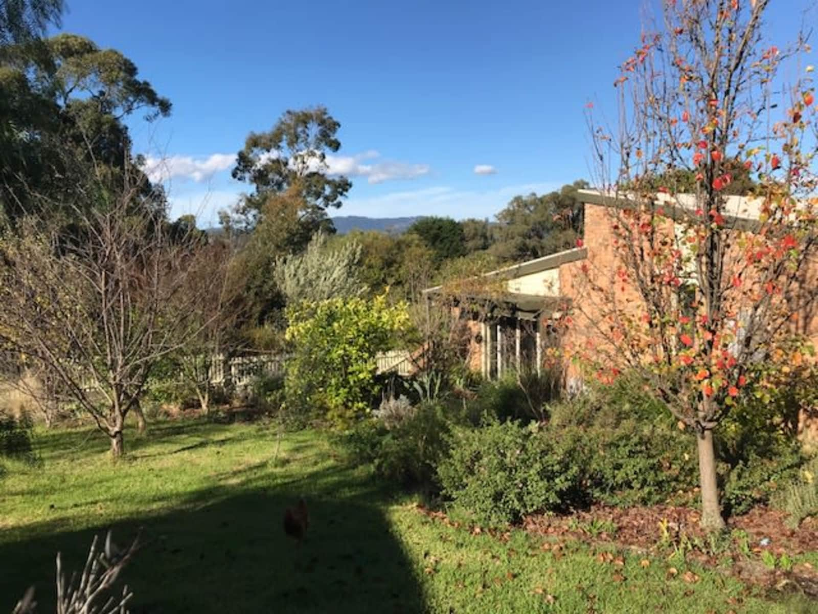 Housesitting assignment in Ringwood, Victoria, Australia