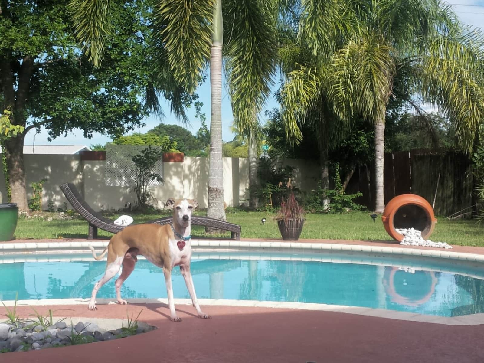 Housesitting assignment in Homestead, Florida, United States