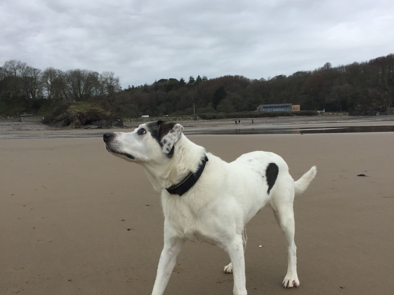 Housesitting assignment in Boncath, United Kingdom