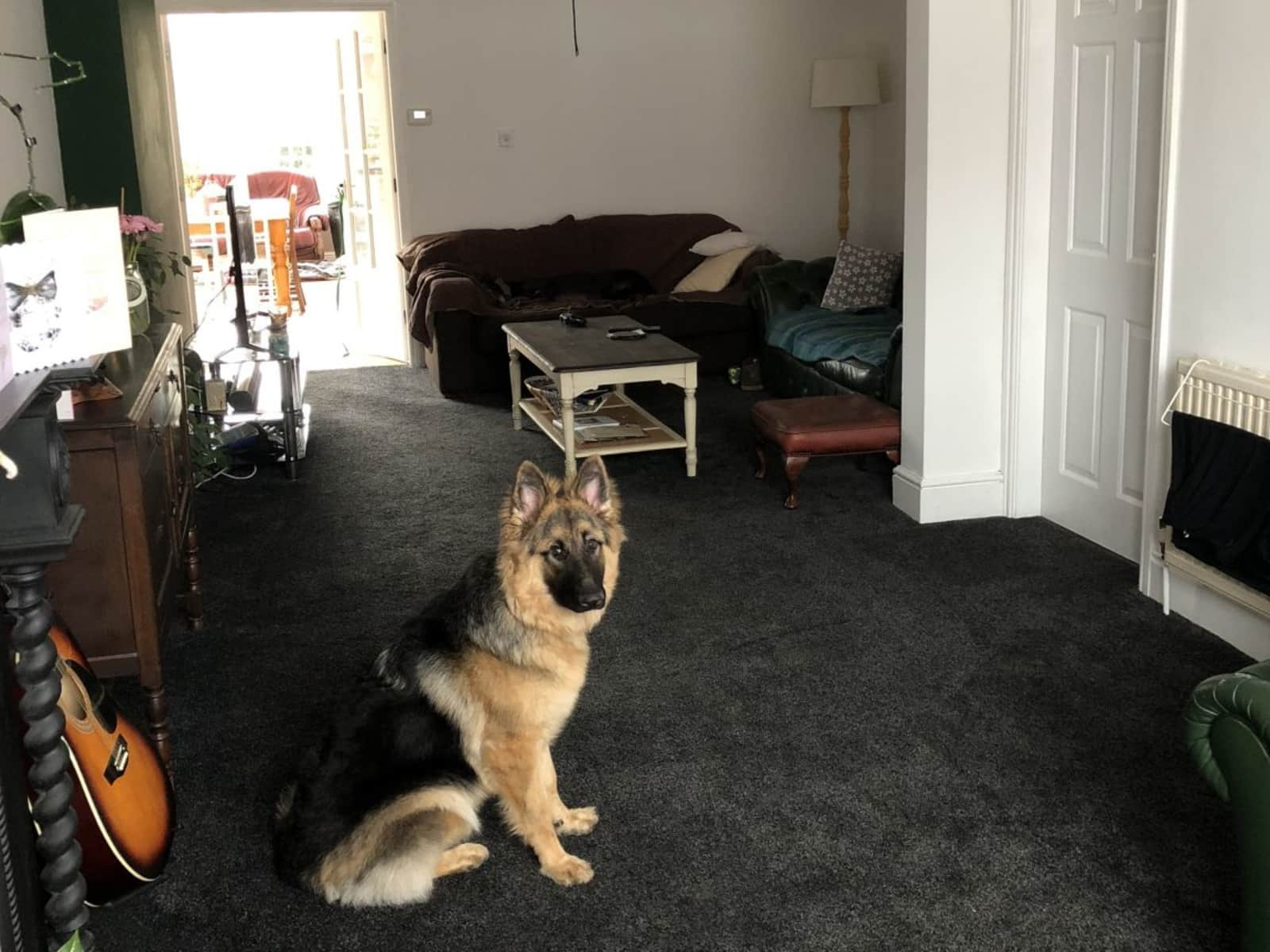 Housesitting assignment in Atherstone, United Kingdom