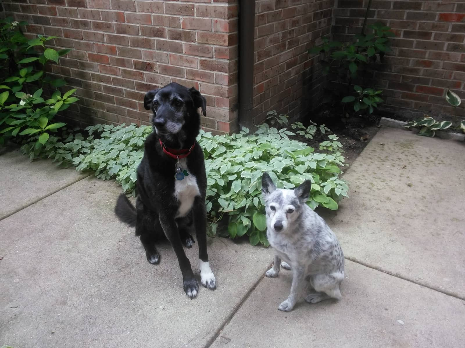 Housesitting assignment in Bingham Farms, Michigan, United States