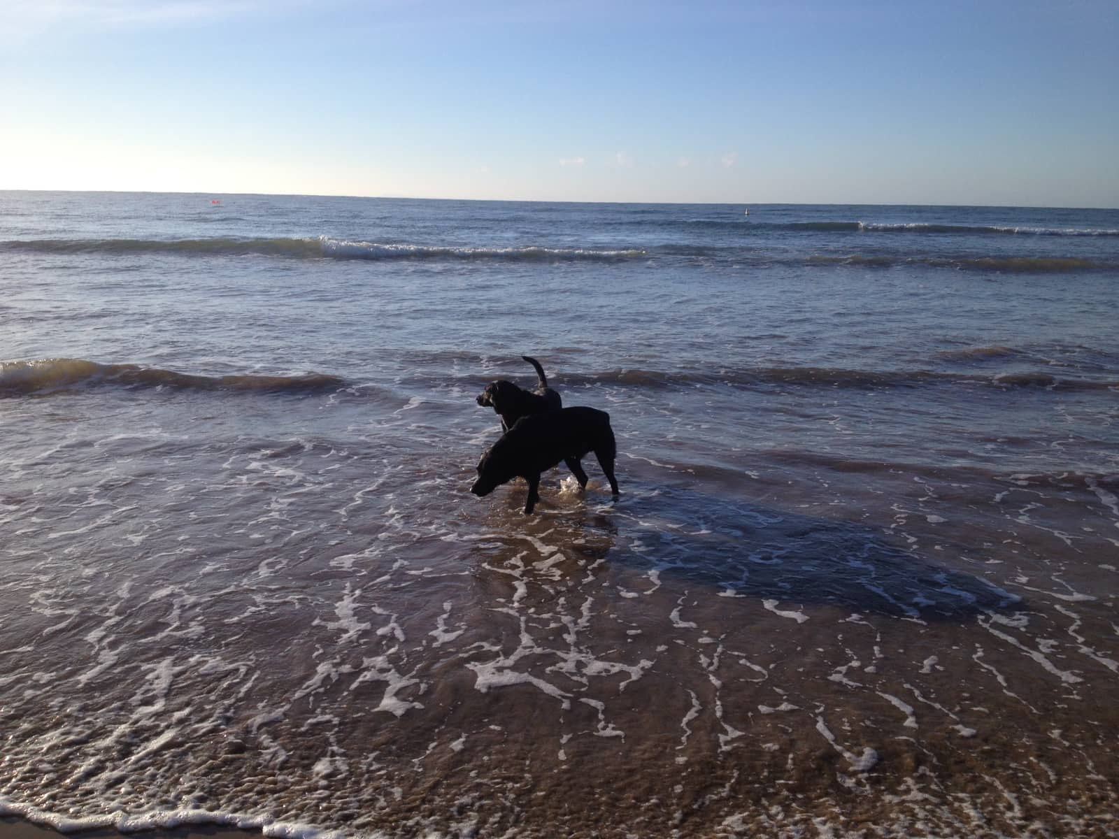 Housesitting assignment in Torquay, Victoria, Australia