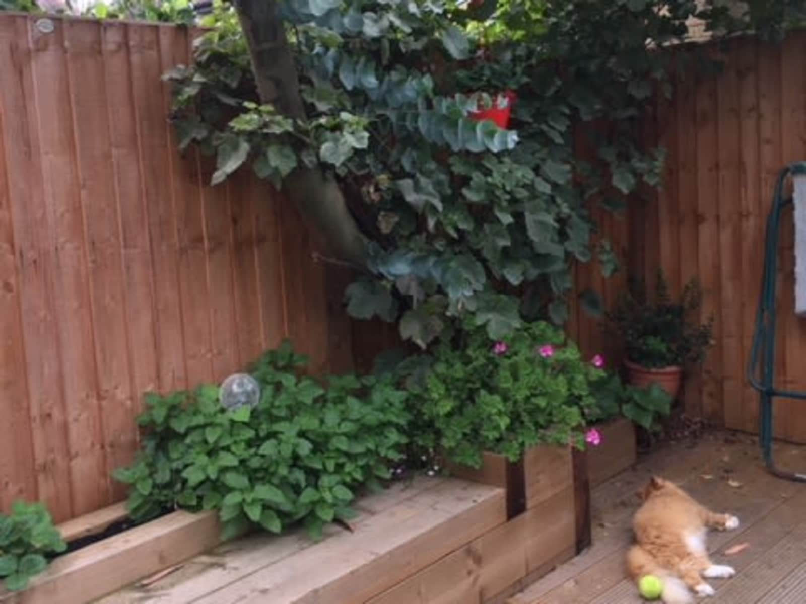 Housesitting assignment in Chiswick, United Kingdom