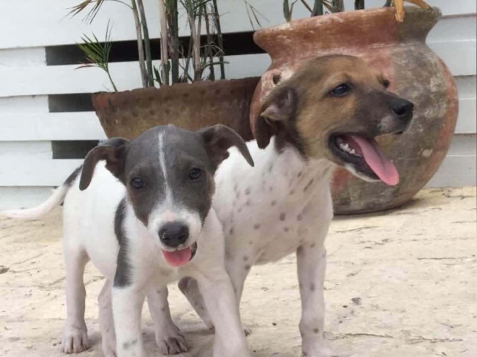 Lynda & Barry from Barnes Hill, Antigua and Barbuda