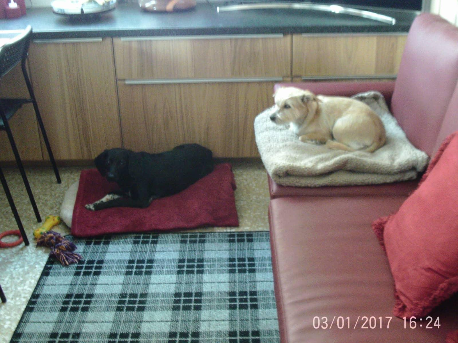 Housesitting assignment in Larnaca, Cyprus