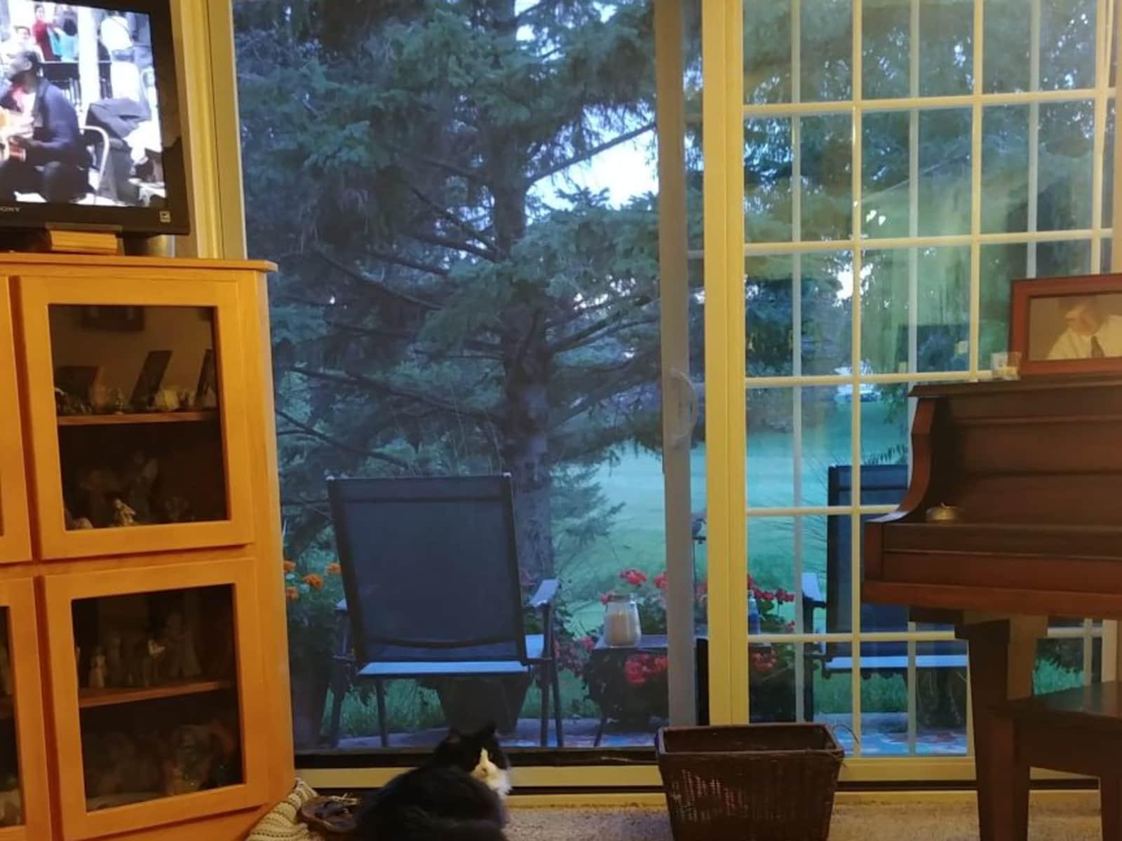 Housesitting assignment in Chaska, Minnesota, United States