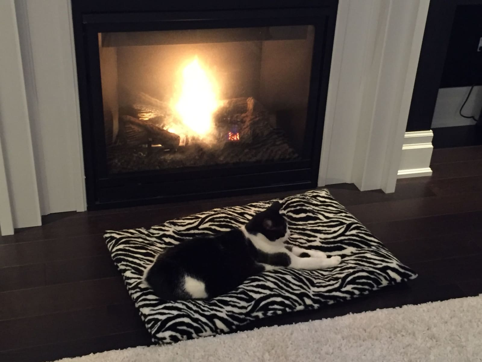 Housesitting assignment in Richmond Hill, Ontario, Canada