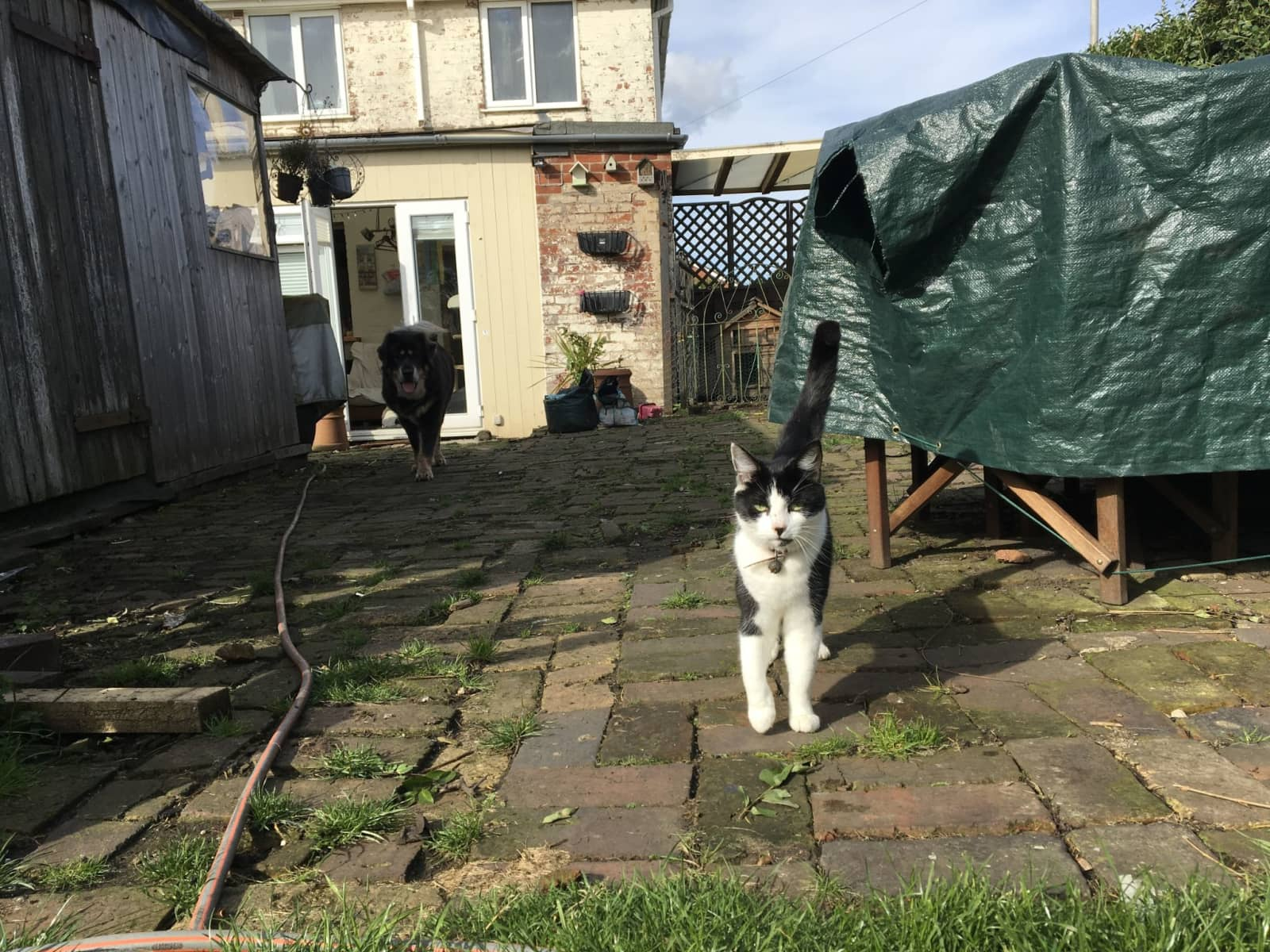 Housesitting assignment in Coalville, United Kingdom