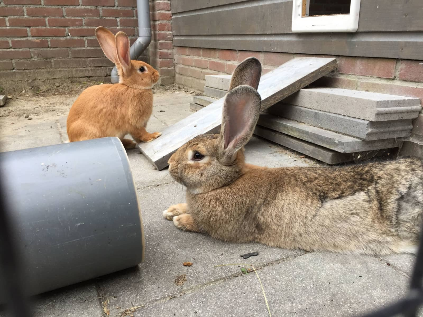 Housesitting assignment in Oosterhout, Netherlands
