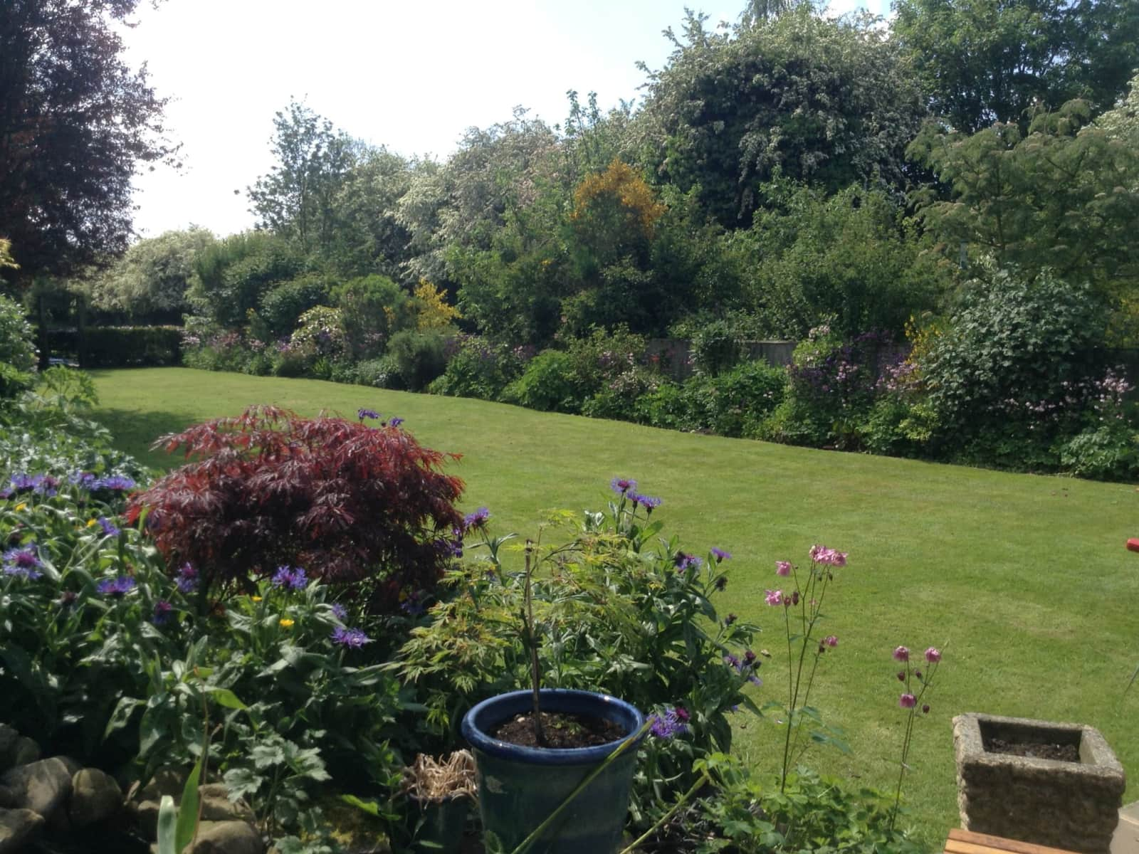 Housesitting assignment in Northallerton, United Kingdom