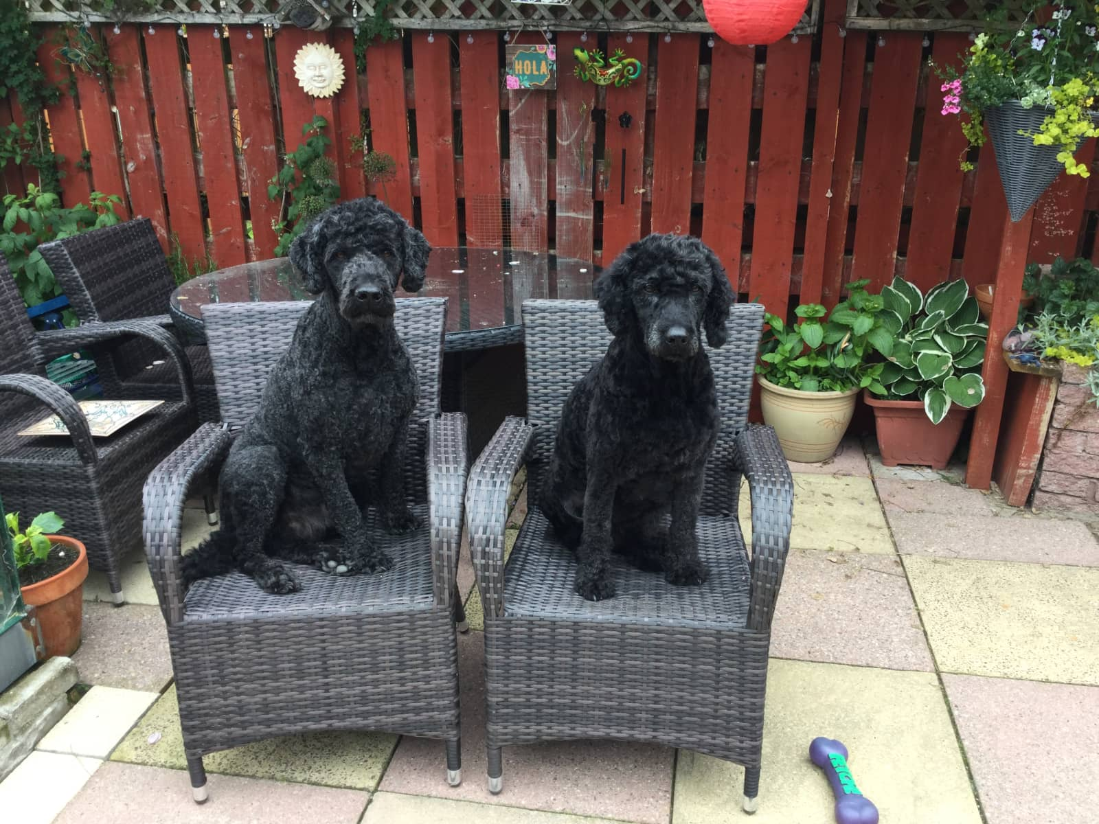 Denise & Franz from Inverness, United Kingdom