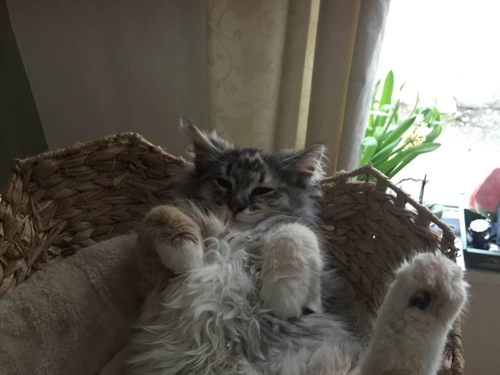 Housesitting assignment in Treorchy, United Kingdom