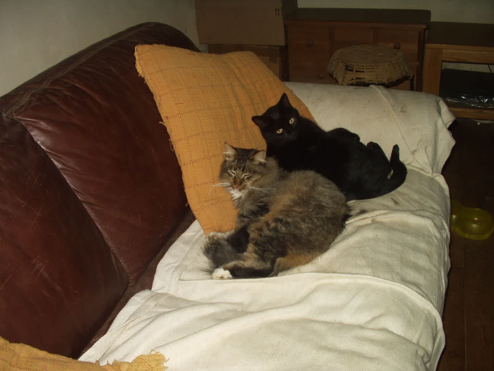 Housesitting assignment in Guilliers, France